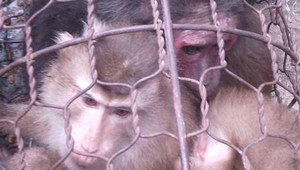 Cứu hộ 19 cá thể động vật hoang dã quý hiếm