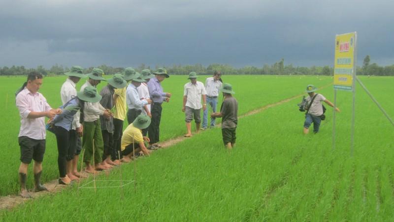 Đưa nông dân sang Thái Lan học tập kinh nghiệm