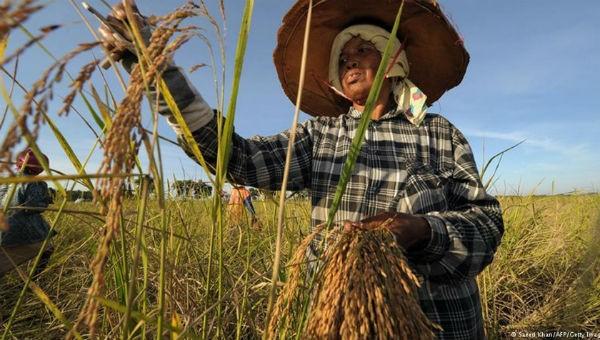 """Khi hạt gạo """"khuynh đảo"""" chính trường Thái Lan"""