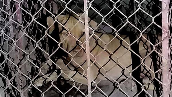 Nữ lao công bị chó cắn phải nhập viện