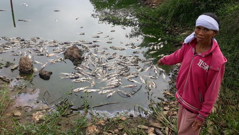Đồng Nai: 13 tấn cá chết vì công an xã ra quyết định lộng quyền