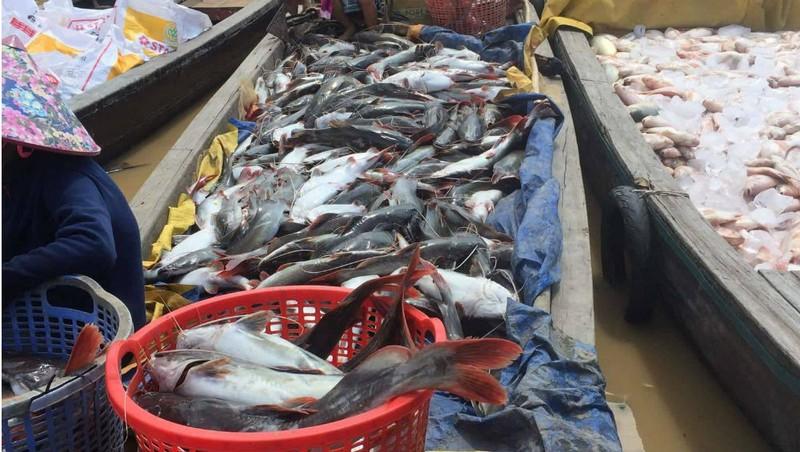 Cá chết dai dẳng nhiều năm trên sông La Ngà (Đồng Nai): Hàng chục năm 'điệp khúc' nguyên nhân do... ông trời