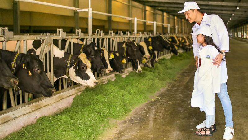 """Tận mắt thấy những cô bò ở """"Resort"""" góp công vào ly sữa học đường"""