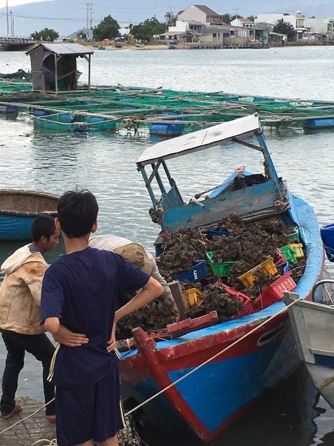 Nghị lực người phụ nữ gầy cơ nghiệp trên vịnh Cam Ranh - Ảnh 4