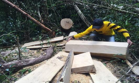 Gia Lai: UBND tỉnh chỉ đạo xử lý trách nhiệm cá nhân, tổ chức liên quan vụ phá rừng ở huyện Mang Yang