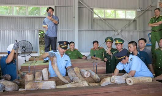 Bắt giữ hàng chục tấn ngà voi từ châu Phi về Cảng Đà Nẵng