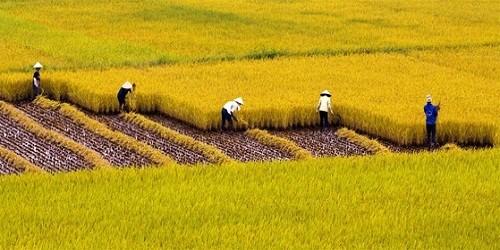 Nhà nước hỗ trợ 1 triệu đồng/ha/năm đất trồng lúa nước