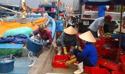 Ngư dân miền Trung vững vàng bám biển