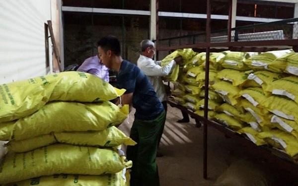Gắn mác 'xịn' cho hàng chục tấn ngô, lạc kém chất lượng bán cho nông dân làm giống