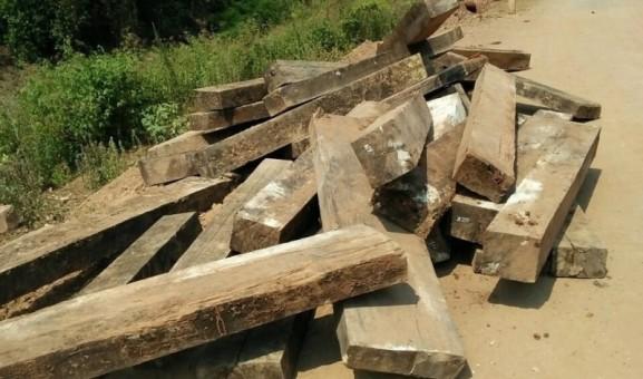 Vụ phá rừng gỗ mun di sản Phong Nha: Khởi tố thêm 6 đối tượng