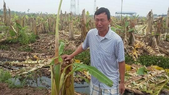 Hải Phòng: Vụ đốn hạ vườn chuối ở Thuỷ Nguyên có dấu hiệu huỷ hoại tài sản