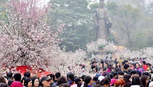 Trưng bày 20.000 cành hoa anh đào và tuyển chọn Đại sứ thiện chí