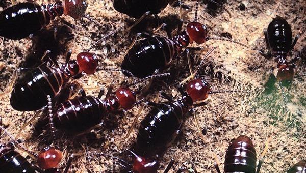 Khám phá đa dạng côn trùng Việt Nam