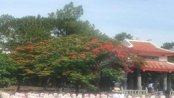 Cháy mãi màu hoa đỏ Trường Sơn