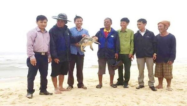 Thả rùa quý hiếm nặng 12kg về biển