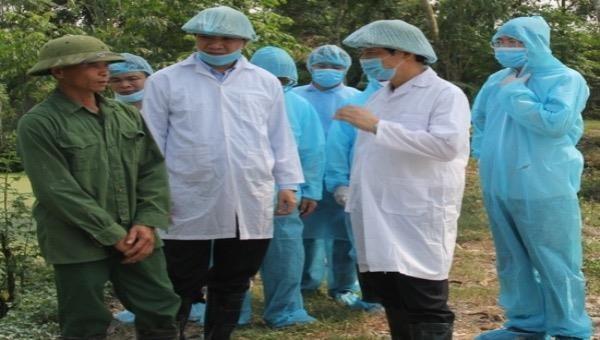 Phê bình Phó Chủ tịch huyện vì lơ là trong công tác chống dịch tả lợn châu Phi